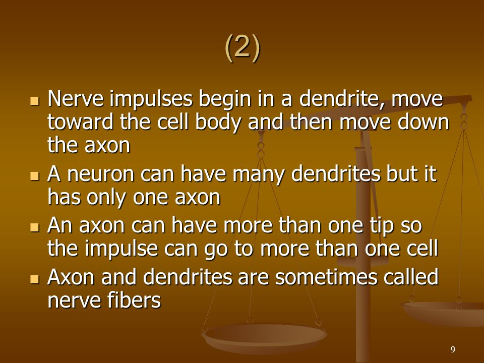 (2) Nerve impulses begin in a dendrite, move toward the cell body and then move down the axon.