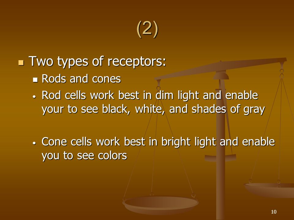 (2) Two types of receptors: Rods and cones