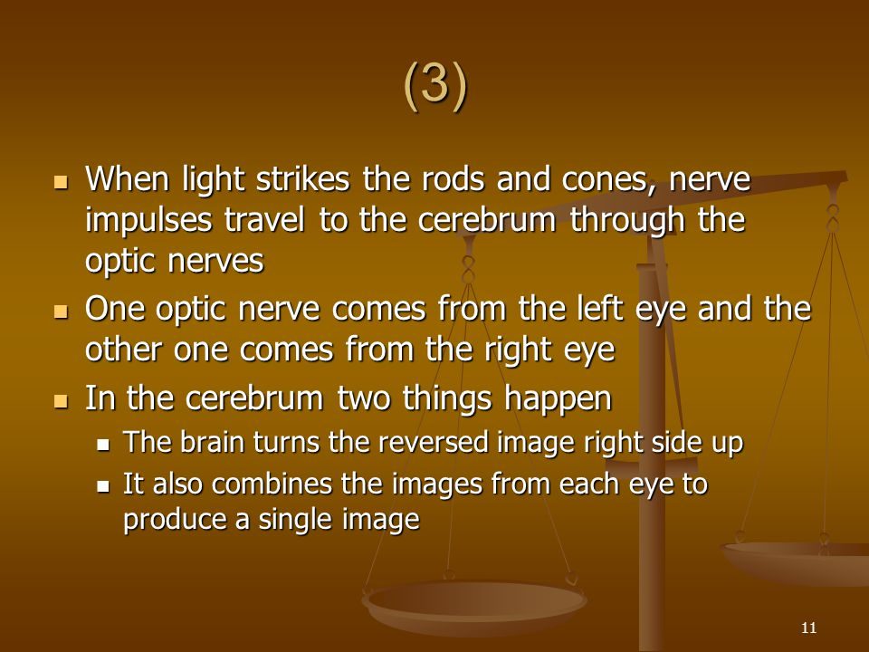 (3) When light strikes the rods and cones, nerve impulses travel to the cerebrum through the optic nerves.