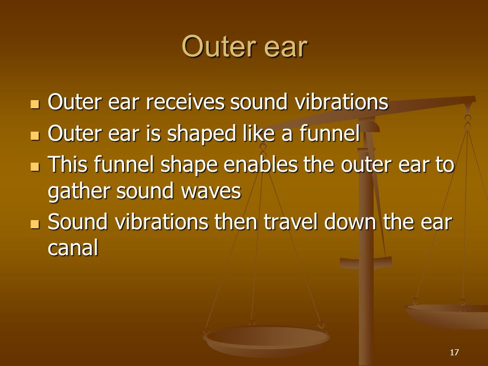 Outer ear Outer ear receives sound vibrations