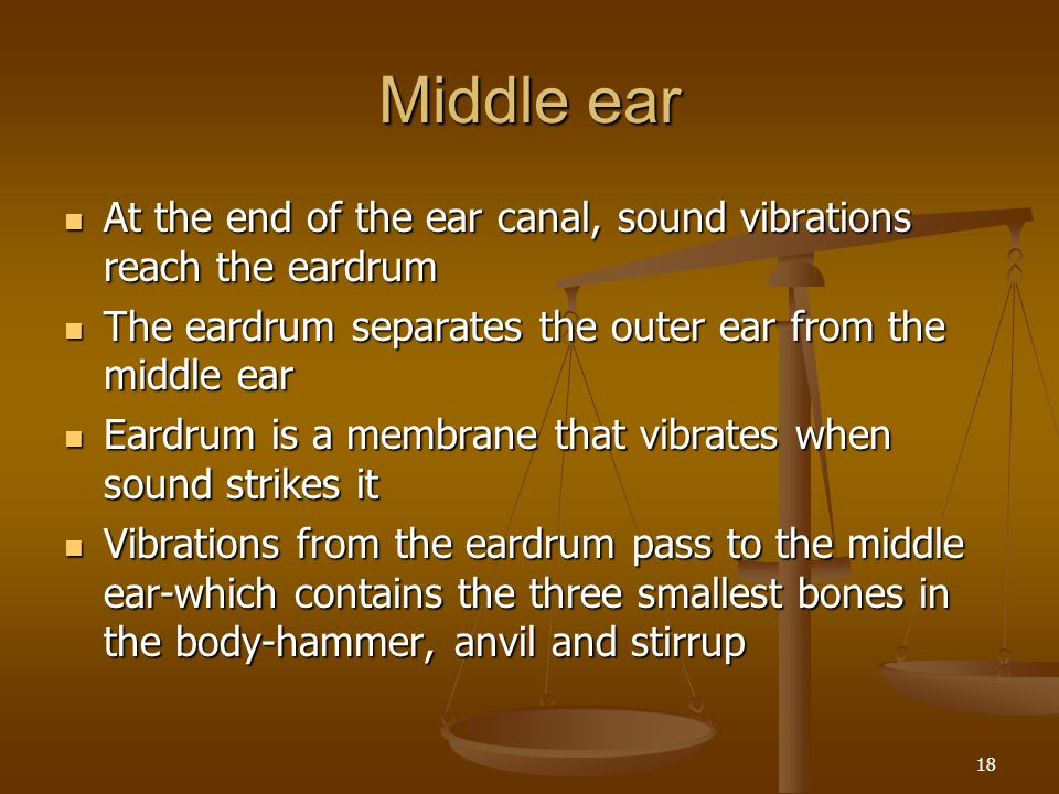 Middle ear At the end of the ear canal, sound vibrations reach the eardrum. The eardrum separates the outer ear from the middle ear.