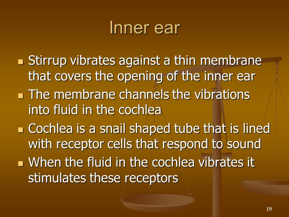 Inner ear Stirrup vibrates against a thin membrane that covers the opening of the inner ear.