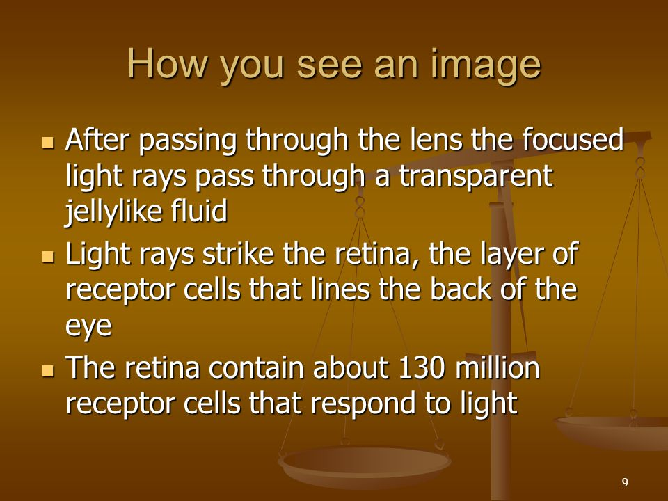 How you see an image After passing through the lens the focused light rays pass through a transparent jellylike fluid.