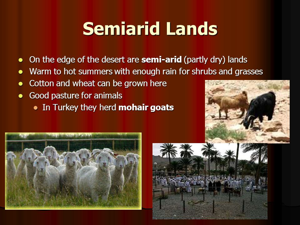 Semiarid Lands On the edge of the desert are semi-arid (partly dry) lands. Warm to hot summers with enough rain for shrubs and grasses.