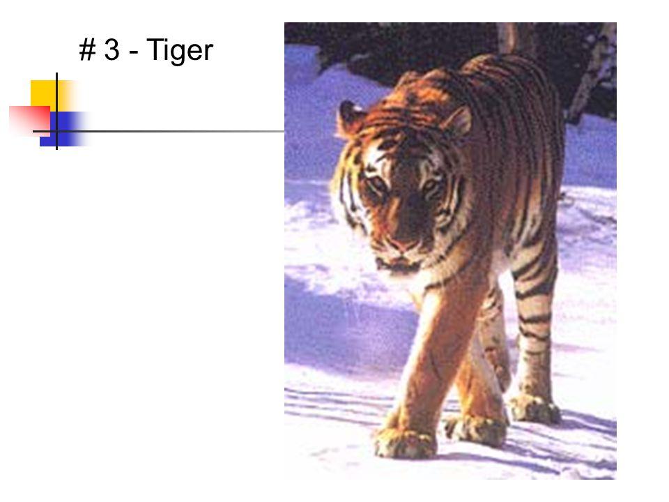 # 3 - Tiger