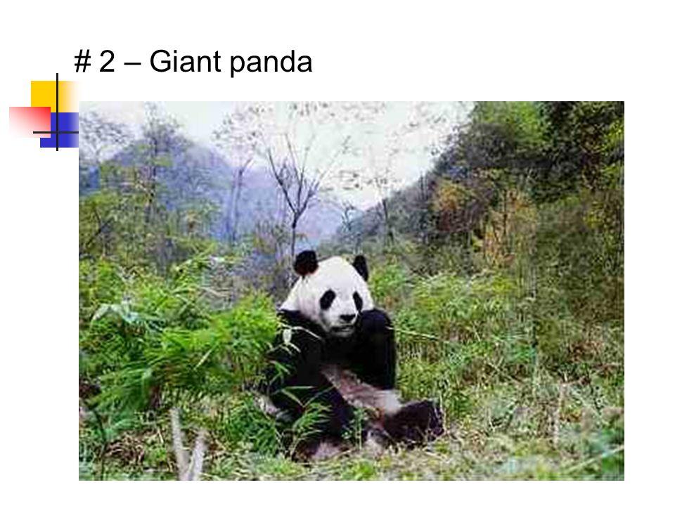 # 2 – Giant panda