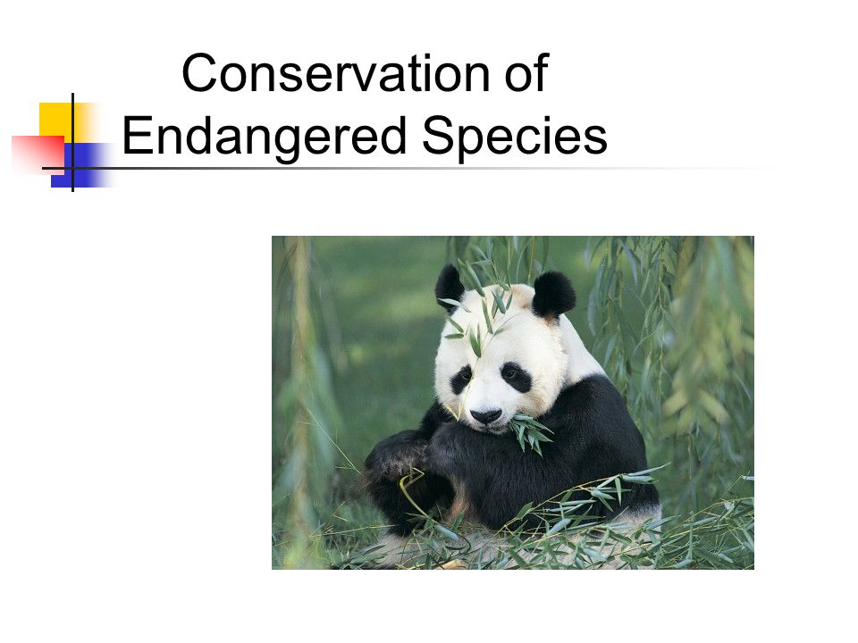 Conservation of Endangered Species