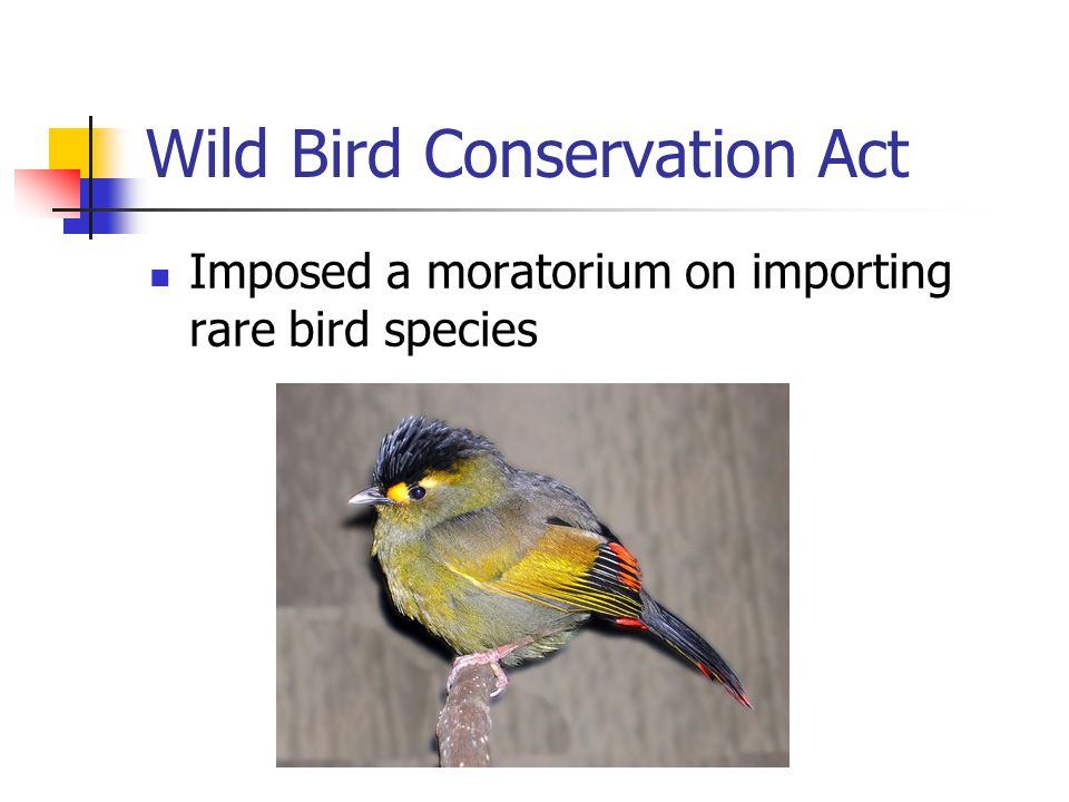 Wild Bird Conservation Act
