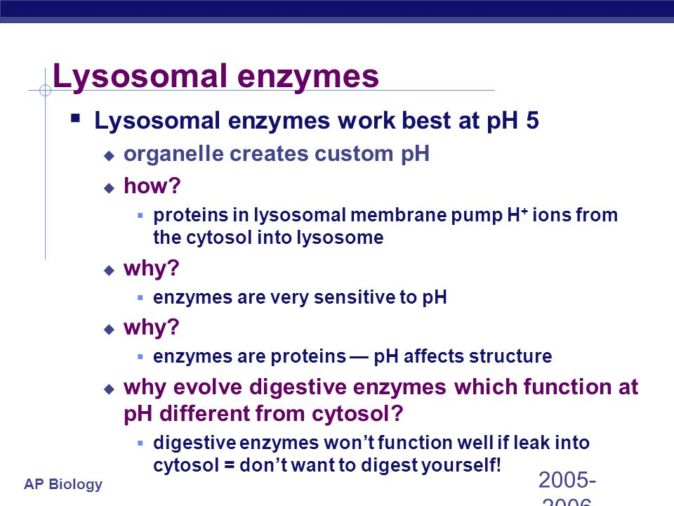 Lysosomal enzymes Lysosomal enzymes work best at pH 5