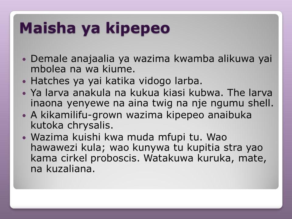 Maisha ya kipepeo Demale anajaalia ya wazima kwamba alikuwa yai mbolea na wa kiume. Hatches ya yai katika vidogo larba.