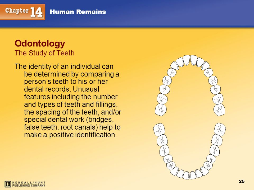Odontology The Study of Teeth