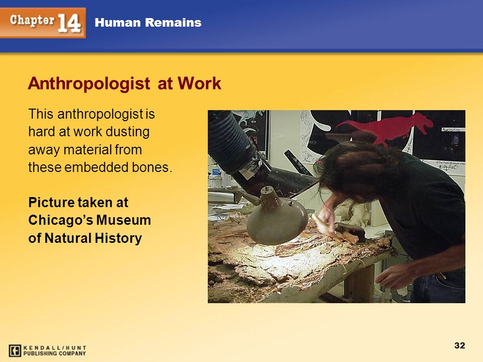 Anthropologist at Work