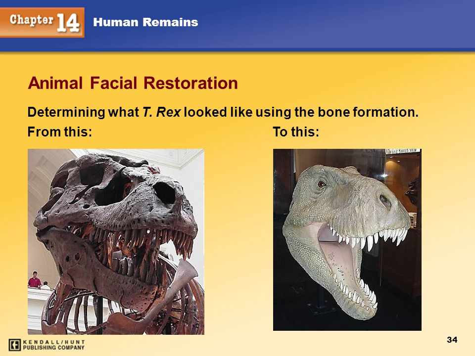 Animal Facial Restoration