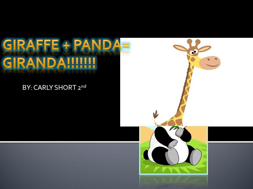 Giraffe + Panda= GIRANDA!!!!!!!