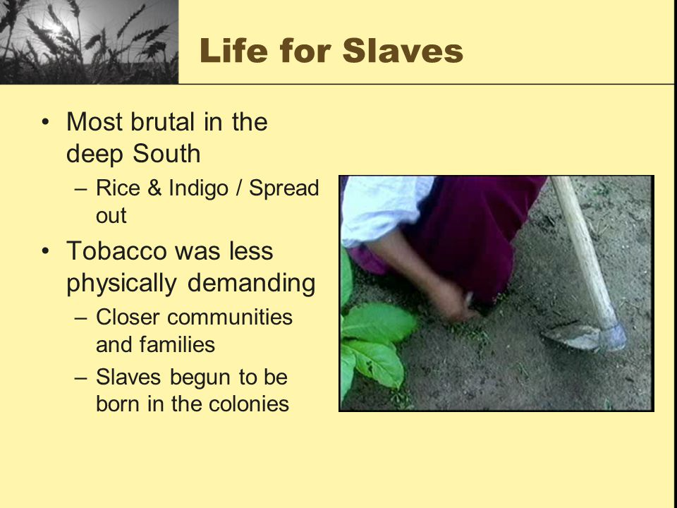 Life for Slaves Most brutal in the deep South