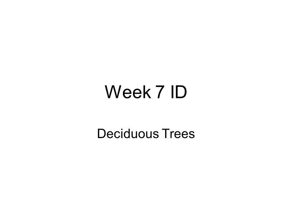 Week 7 ID Deciduous Trees