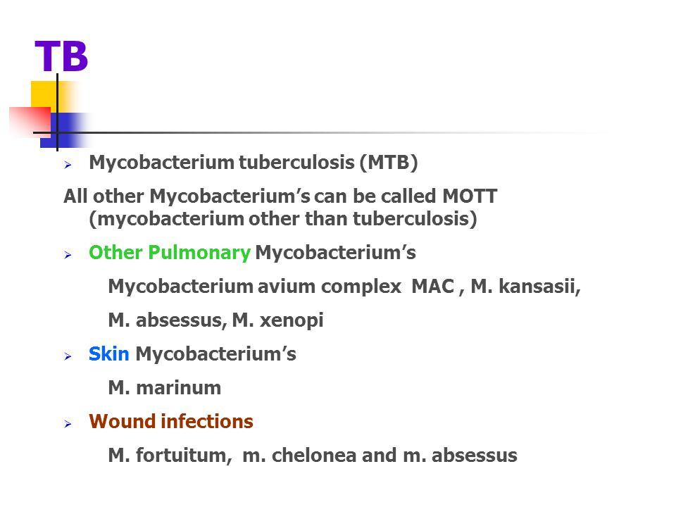 TB Mycobacterium tuberculosis (MTB)