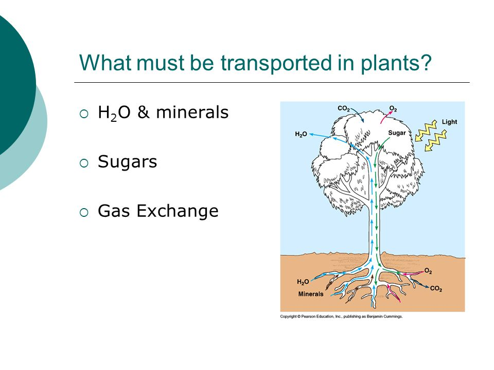 What must be transported in plants