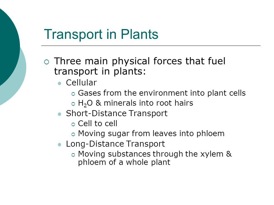Transport in Plants Three main physical forces that fuel transport in plants: Cellular. Gases from the environment into plant cells.