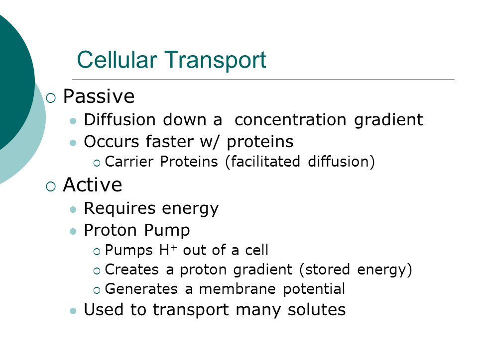 Cellular Transport Passive Active