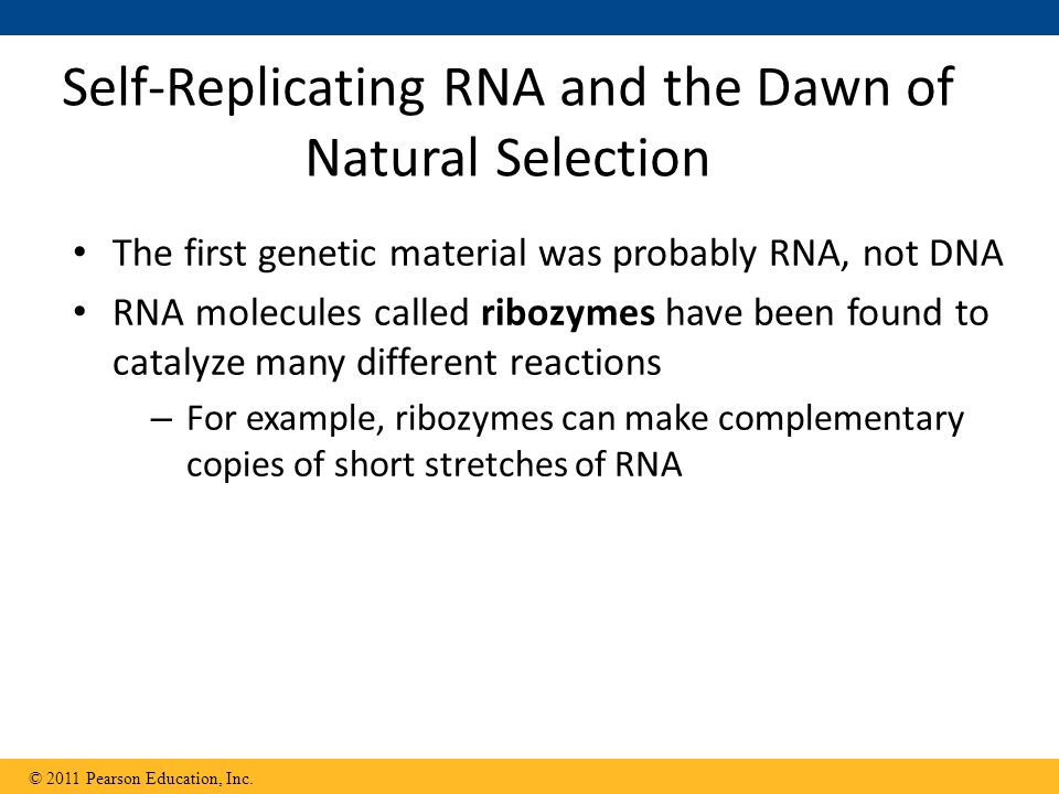 Self-Replicating RNA and the Dawn of Natural Selection
