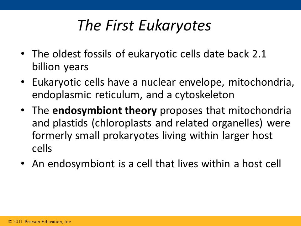 The First Eukaryotes The oldest fossils of eukaryotic cells date back 2.1 billion years.