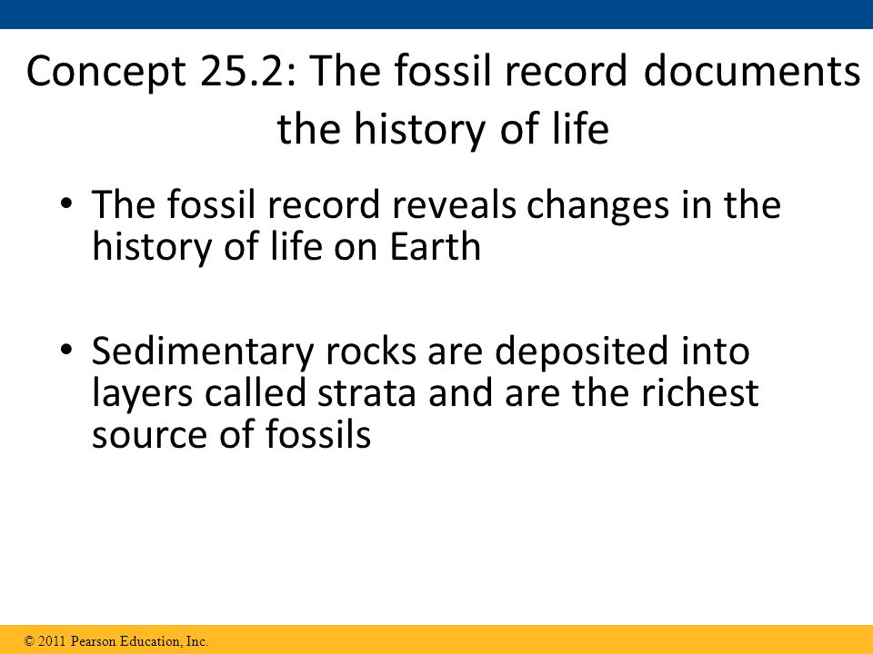 Concept 25.2: The fossil record documents the history of life