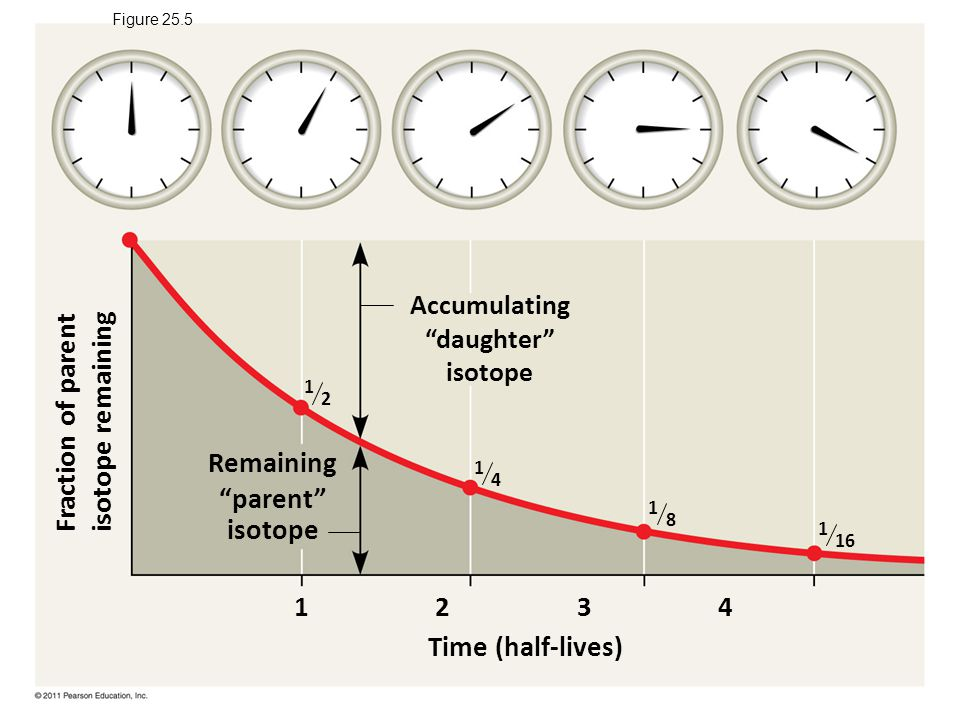 Remaining parent isotope Time (half-lives)