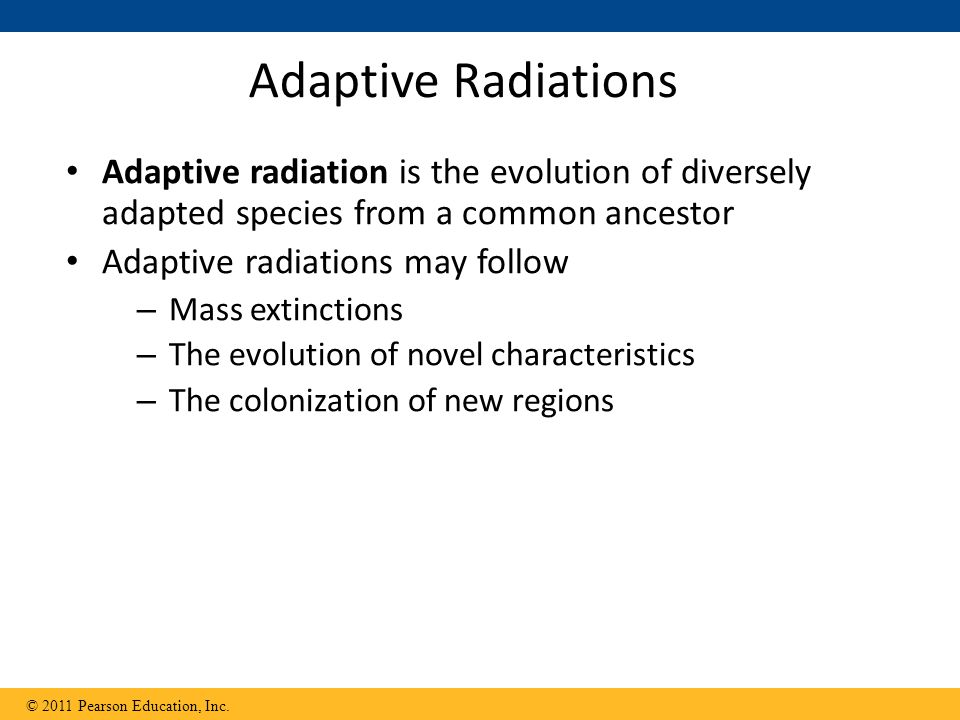 Adaptive Radiations Adaptive radiation is the evolution of diversely adapted species from a common ancestor.