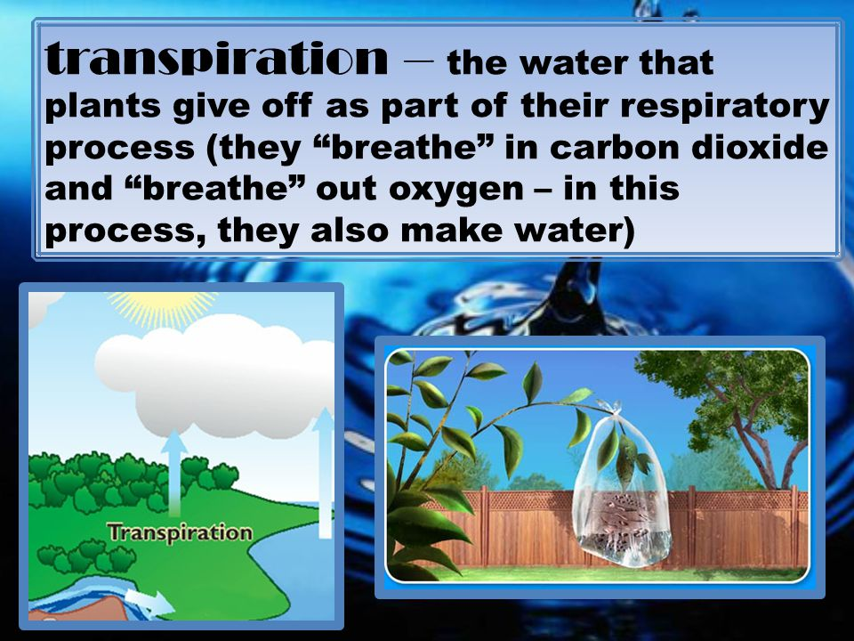 transpiration – the water that plants give off as part of their respiratory process (they breathe in carbon dioxide and breathe out oxygen – in this process, they also make water)