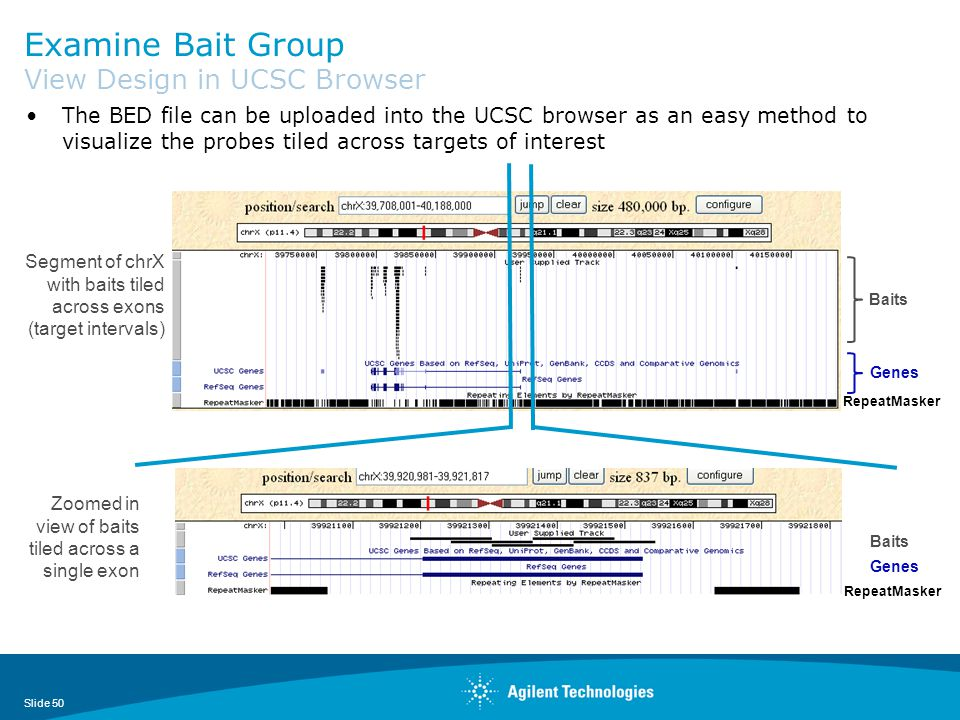 Examine Bait Group View Design in UCSC Browser