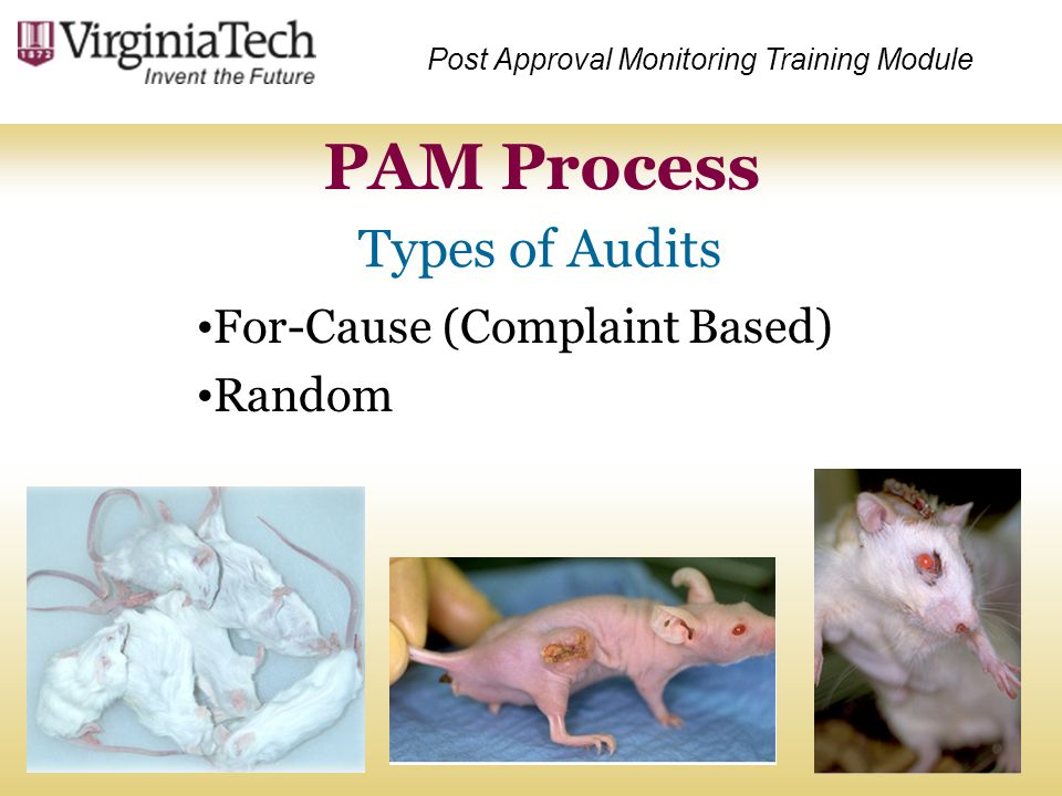 PAM Process Types of Audits For-Cause (Complaint Based) Random