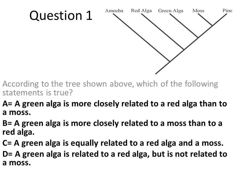 Question 1 According to the tree shown above, which of the following statements is true