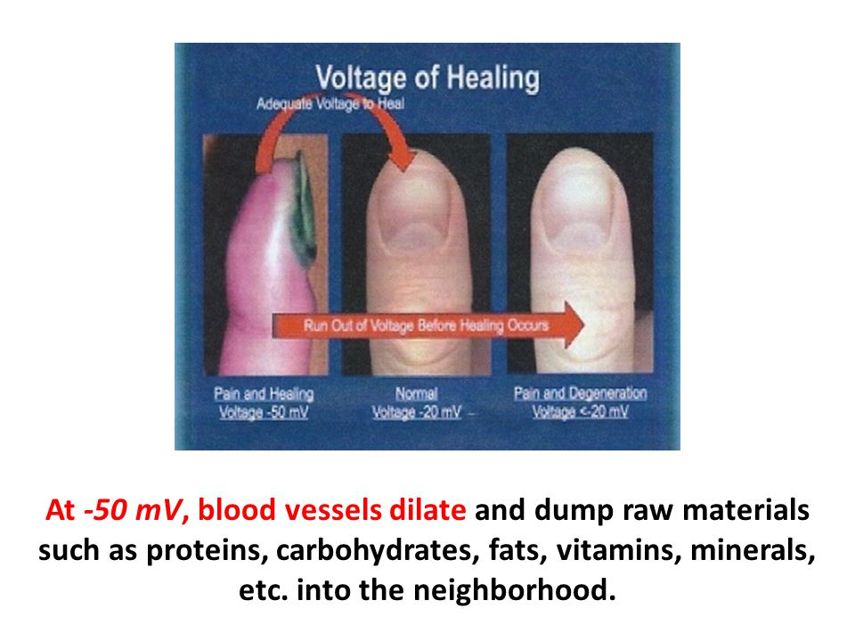 At -50 mV, blood vessels dilate and dump raw materials such as proteins, carbohydrates, fats, vitamins, minerals, etc.