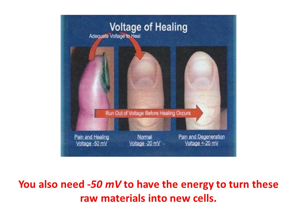 You also need -50 mV to have the energy to turn these raw materials into new cells.