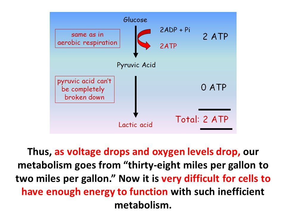 Thus, as voltage drops and oxygen levels drop, our metabolism goes from thirty-eight miles per gallon to two miles per gallon. Now it is very difficult for cells to have enough energy to function with such inefficient metabolism.