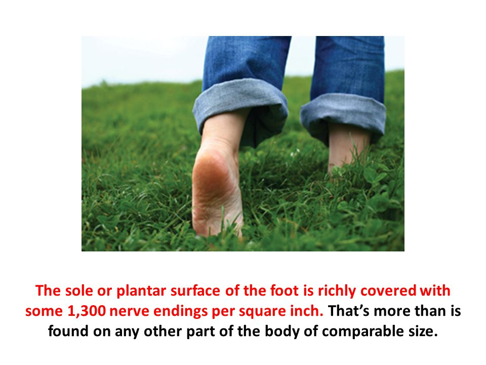 The sole or plantar surface of the foot is richly covered with some 1,300 nerve endings per square inch.
