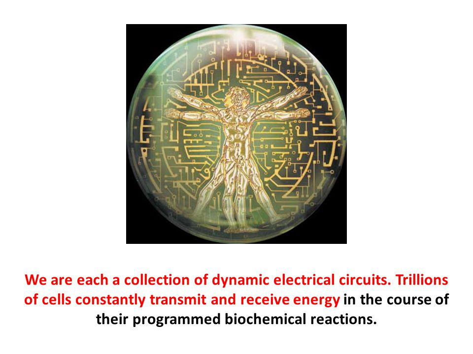 We are each a collection of dynamic electrical circuits
