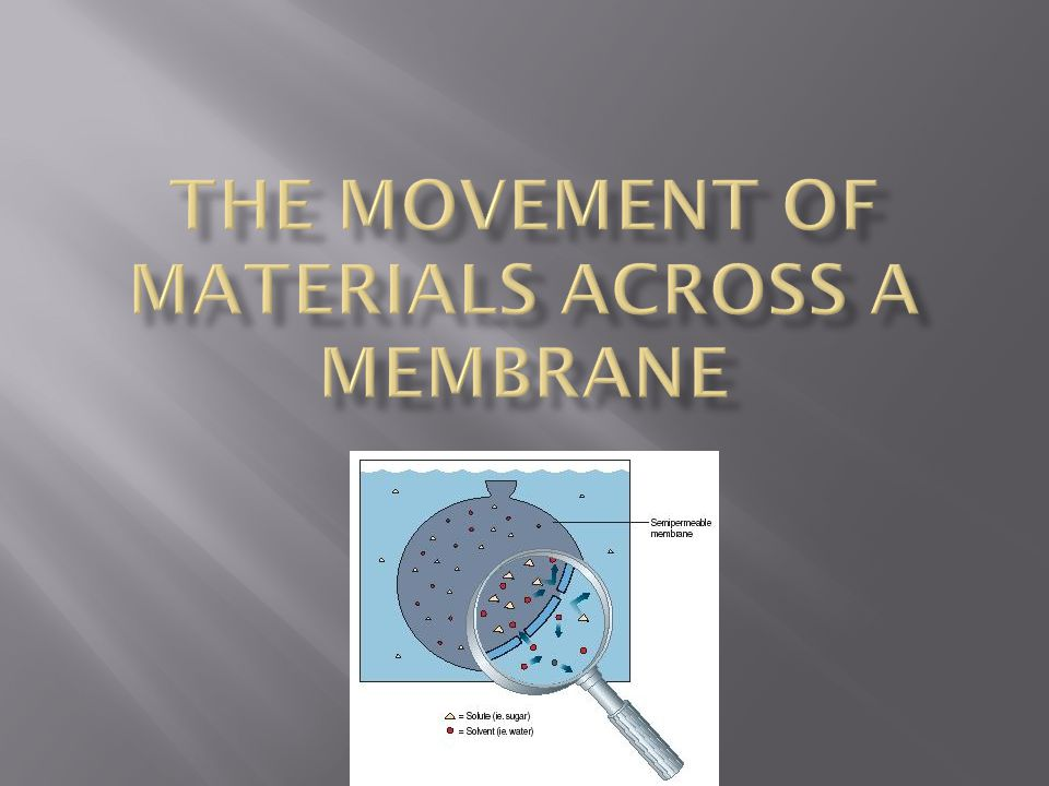THE MOVEMENT OF MATERIALS ACROSS A MEMBRANE