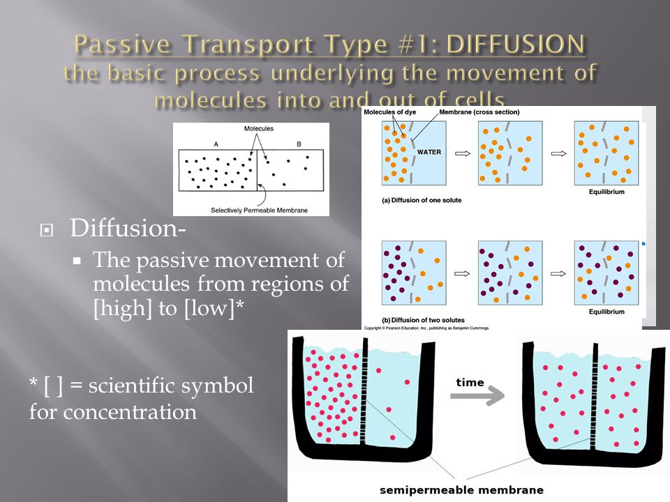 Passive Transport Type #1: DIFFUSION the basic process underlying the movement of molecules into and out of cells