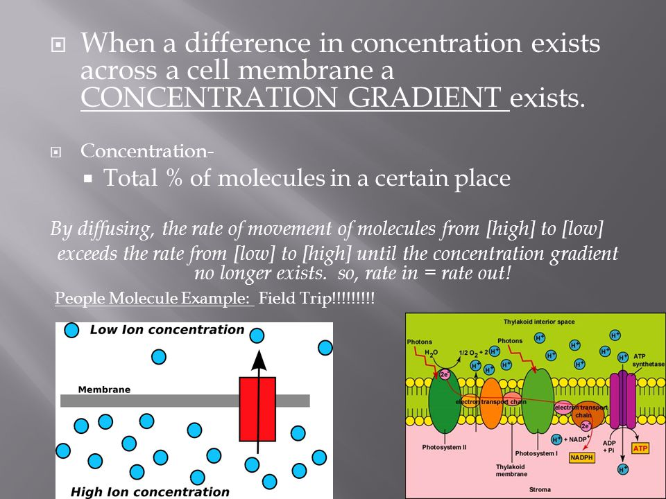 When a difference in concentration exists across a cell membrane a CONCENTRATION GRADIENT exists.
