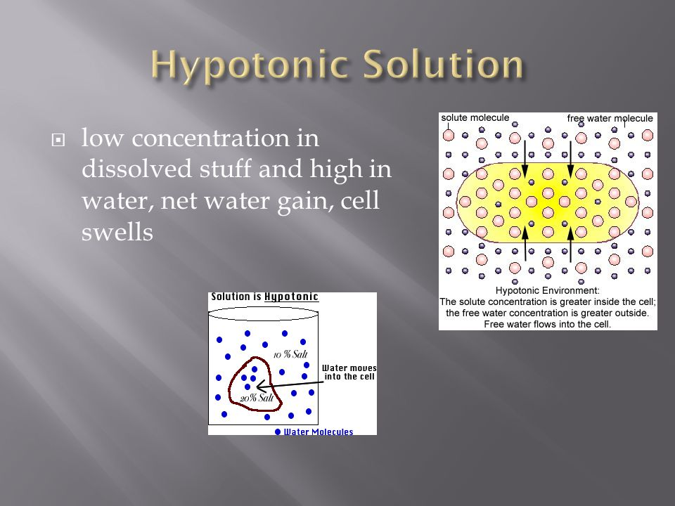 Hypotonic Solution low concentration in dissolved stuff and high in water, net water gain, cell swells.