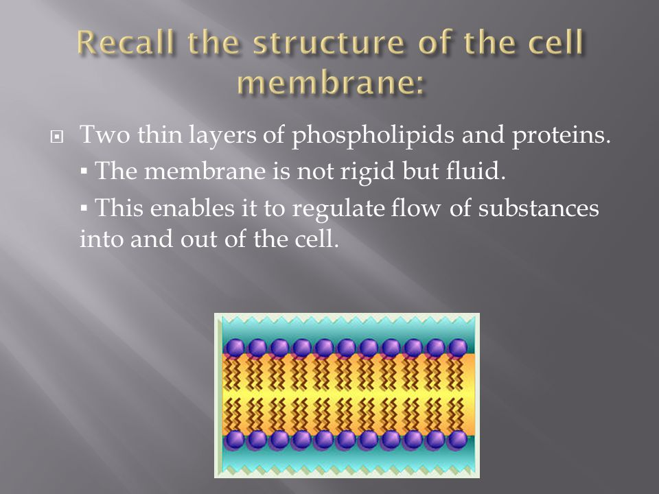 Recall the structure of the cell membrane: