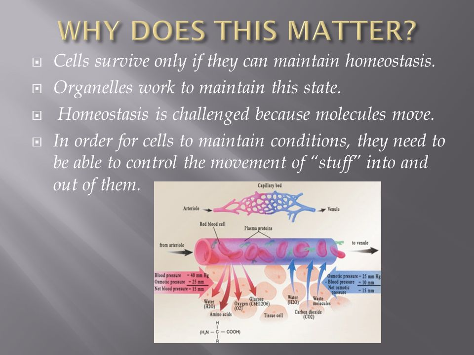 WHY DOES THIS MATTER Cells survive only if they can maintain homeostasis. Organelles work to maintain this state.