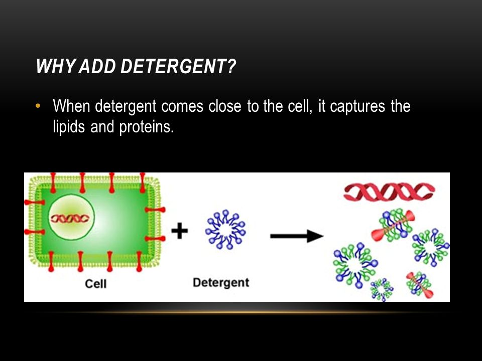 Why add detergent When detergent comes close to the cell, it captures the lipids and proteins.