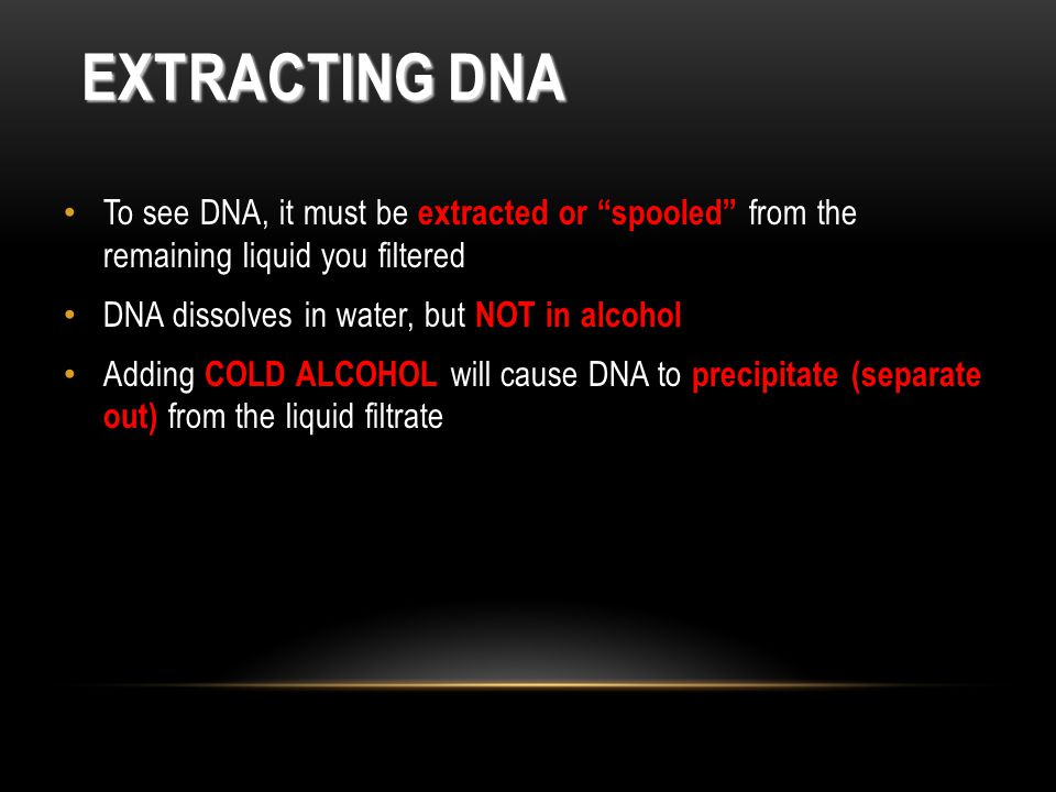 Extracting DNA To see DNA, it must be extracted or spooled from the remaining liquid you filtered.