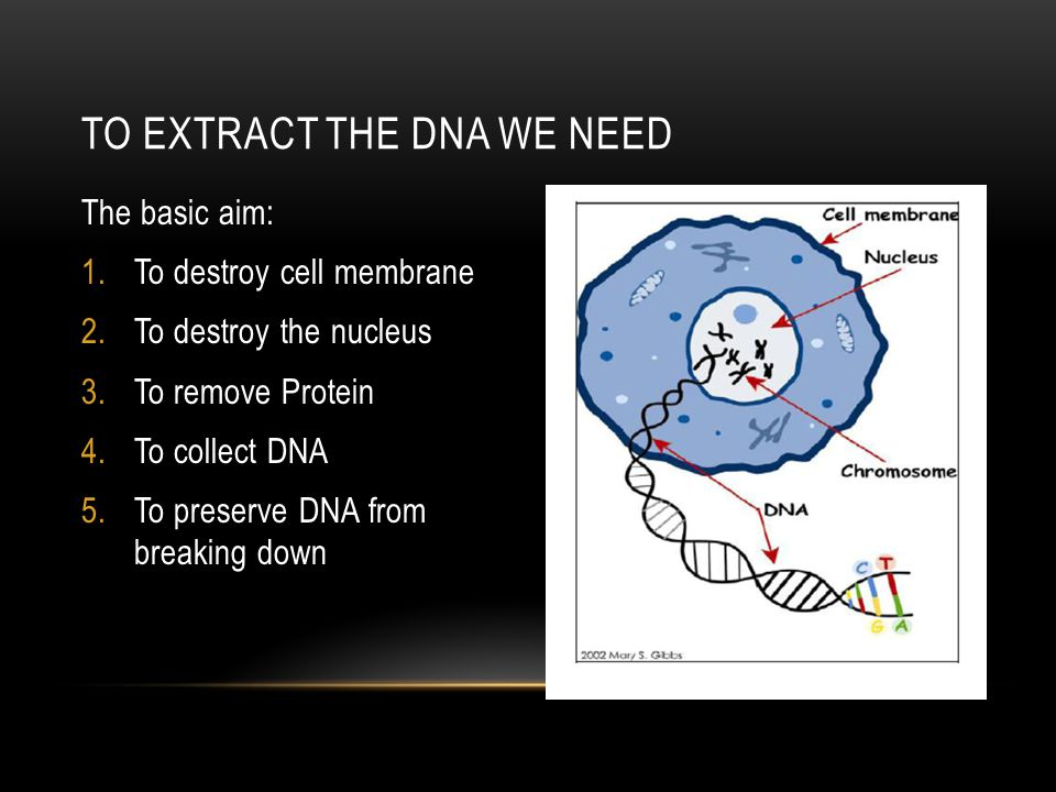 To Extract the dna we need