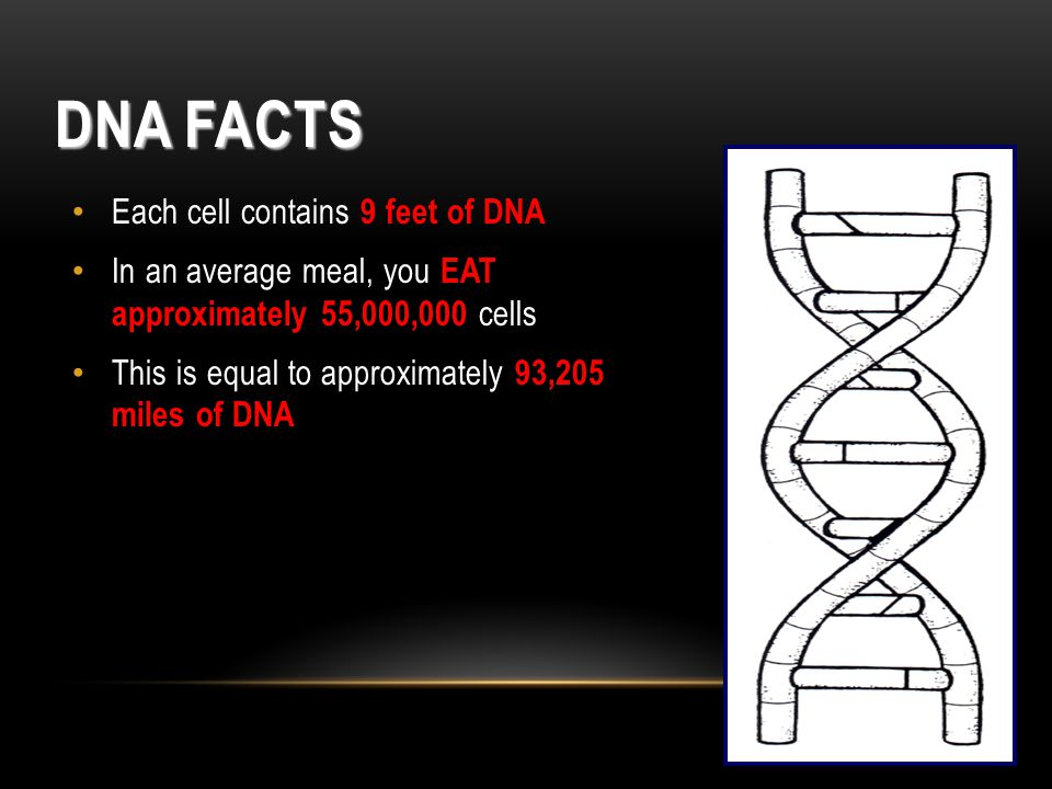 DNA Facts Each cell contains 9 feet of DNA