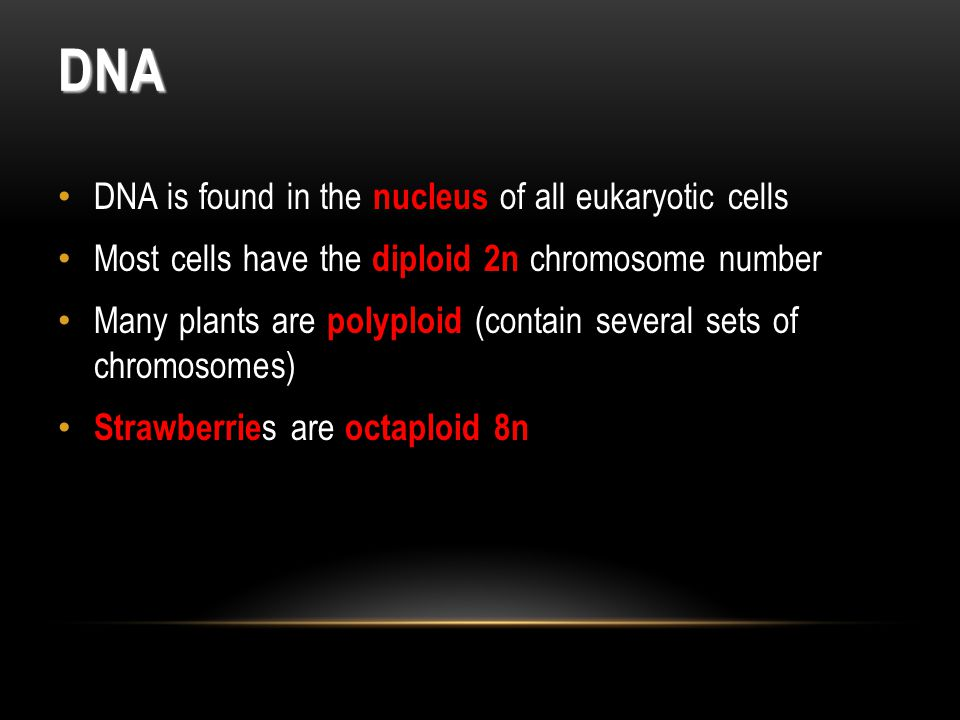 DNA DNA is found in the nucleus of all eukaryotic cells