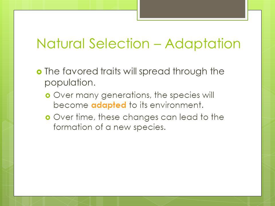Natural Selection – Adaptation